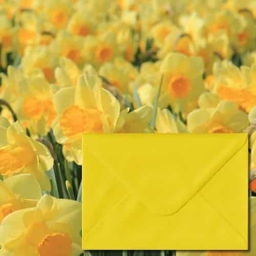 Daffodil Yellow Colour Envelopes